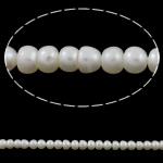 Button kultivierte Süßwasserperlen, Natürliche kultivierte Süßwasserperlen, weiß, Klasse AA, 5-6mm, Bohrung:ca. 0.8mm, verkauft per 14.5 ZollInch Strang