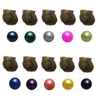 Oyster & amp; Wunsch Perlen-Kit, Akoya Zuchtperlen, Kartoffel, gemischte Farben, 6-7mm, 10PCs/Tasche, verkauft von Tasche