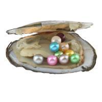 Süßwasser kultivierte Liebe wünschen Perlenaustern, Natürliche kultivierte Süßwasserperlen, Kartoffel, gemischte Farben, 7-8mm, verkauft von PC