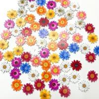 Holz Zweilochknöpfe, Blume, gemischte Farben, 25mm, 50PCs/Tasche, verkauft von Tasche