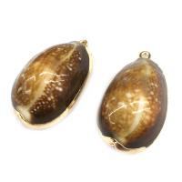 Natürliche Seemuschel Anhänger, Trompete Muschel, oval, goldfarben plattiert, DIY, gemischte Farben, 18x30mm~20x32mm, verkauft von PC